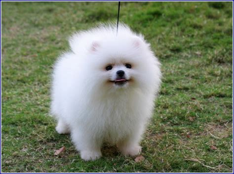 cutest big breeds big dogs breeds pet photos gallery 4936keybmo