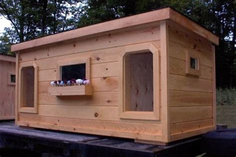 double dog house double dog house roxy ace pinterest