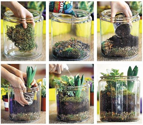 the world of terrariums your personal ecological garden