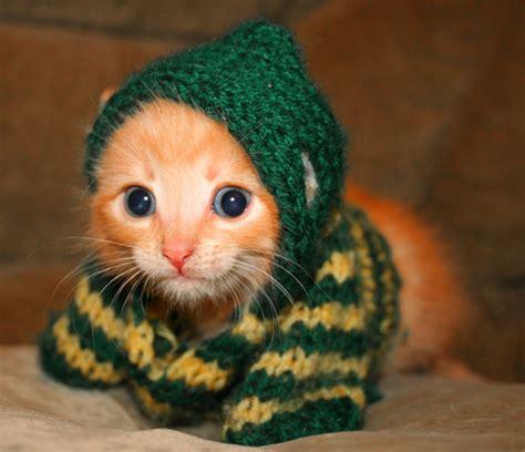 kitten in a sweater   Kittens Photo (5890480)   Fanpop