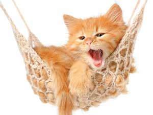 Wie Lange Kann Rohes Fleisch Im Kühlschrank Aufbewahren by Bei Hauskatzen Kann Schnell Langeweile Aufkommen
