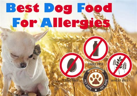 best shoo for dogs with allergies best food for allergies the guide to finding the non allergenic causing food