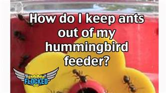 how do i keep ants out of my hummingbird feeder flocked