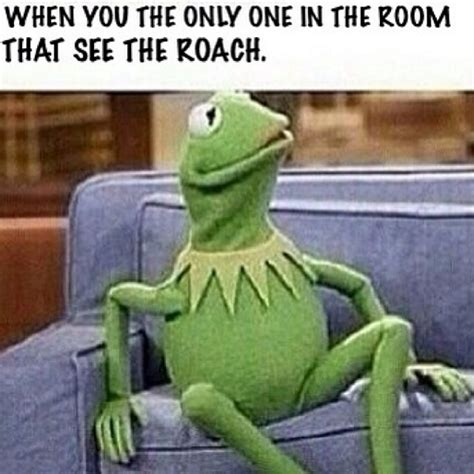 Funny Kermit Memes - kermit the frog memes page 2