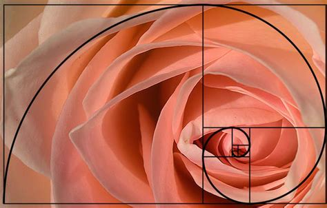 golden section photography definition the golden ratio jueves filosofico