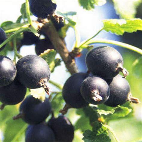 Immergr Ne Pflanzen F R Sonnige Standorte 224 by Gehlhaar Gartenbaumschule Hannover Gt Pflanzen