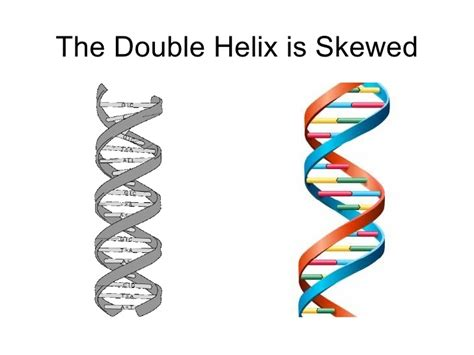 the double and the the dna double helix