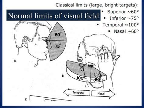 field test visual field testing and interpretation