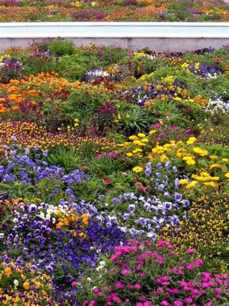 Indian Flower Garden Indian Flower Garden Beautiful Peaceful Gardens Colorful Flowers Gardens And
