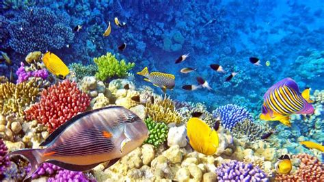 wallpaper colorful fish and interactive water raja ampat underwater photo tropical colorful fish coral