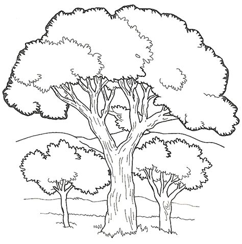 Tree Coloring Book Coloring Home Color Trees
