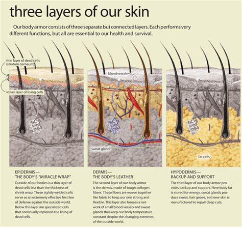 layer of fat on back of head skin answers in genesis