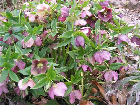 piante e fiori autunnali fiori e piante autunnali per il vostro balcone foto