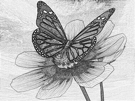 drawing on beautiful flower and butterfly drawings pencil drawings of