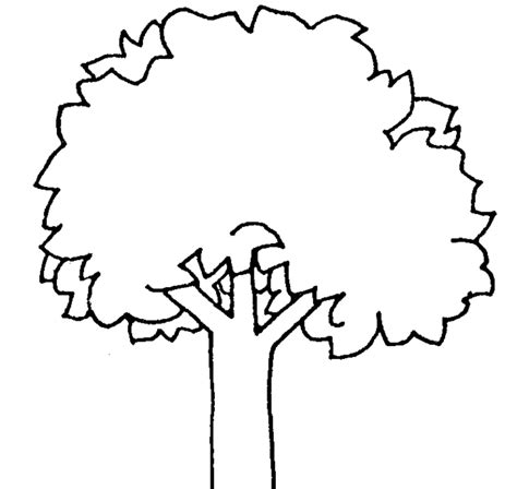 Clip Tree Outline by Oak Tree Outline Clipart Best