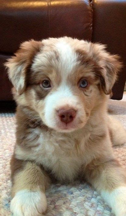 puppy pic best 25 puppies ideas on puppies dogs and puppies and dogs and