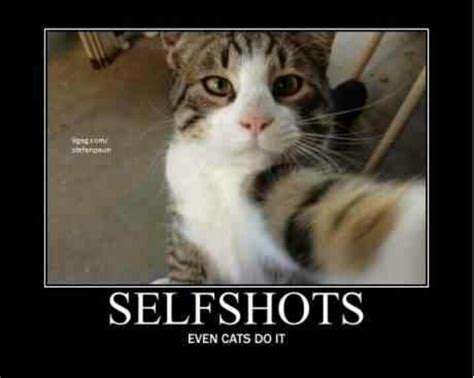 Cat Meme Funny - funny cat meme fun pinterest cat selfie cats and
