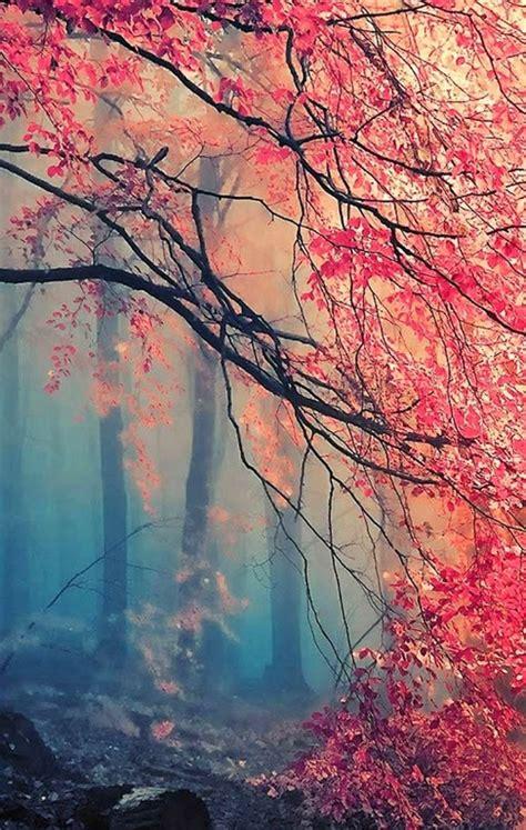 japan wallpaper pinterest misty japanese maple good for phone background
