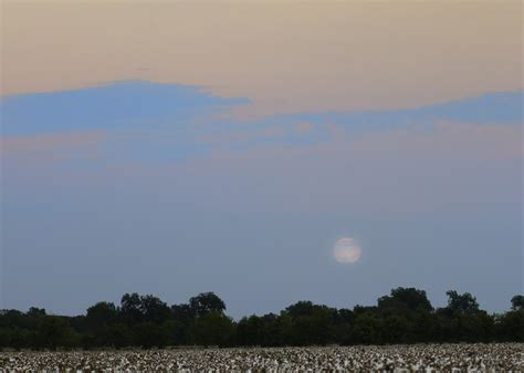 bluemoon comforts stretching my comfort zone blue moon over cottonfield