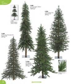 types of evergreen trees www imgkid com the image kid