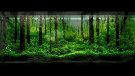 Tutorial Aquascape by 50 Aquascape Terbaik