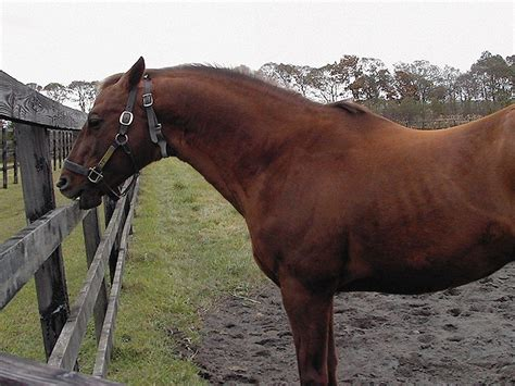 cribbing home on the range equine digest