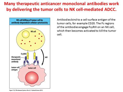 therapeutic monoclonal antibodies from bench to clinic therapeutic monoclonal antibodies from bench to clinic