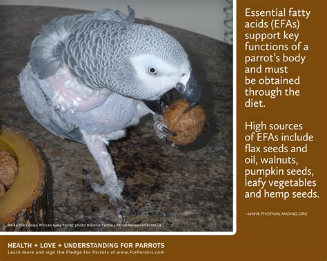 nuts for parrots posters for parrot advocates