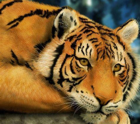 imagenes en 3d de tigres image gallery leopard os y leones