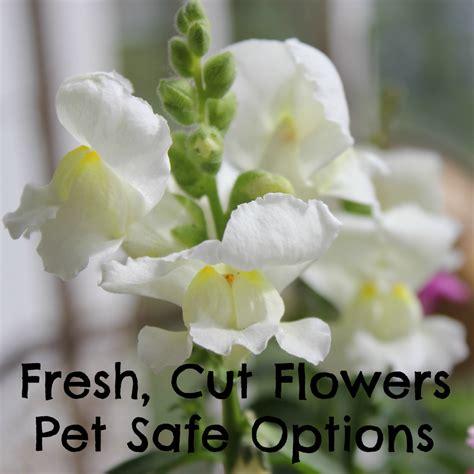 pet safe fresh cut flowers options