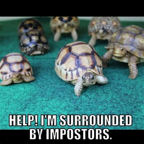 Tortoise Meme - the funny thread off topic choice of games forum