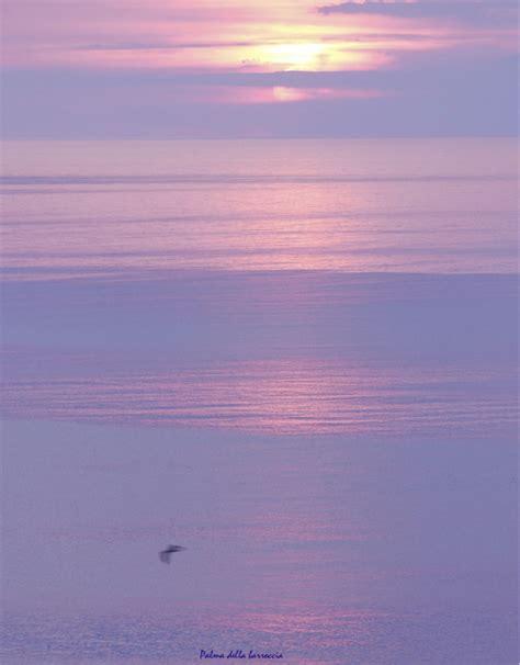 gabbiano mare come un gabbiano isola giglio giglionews