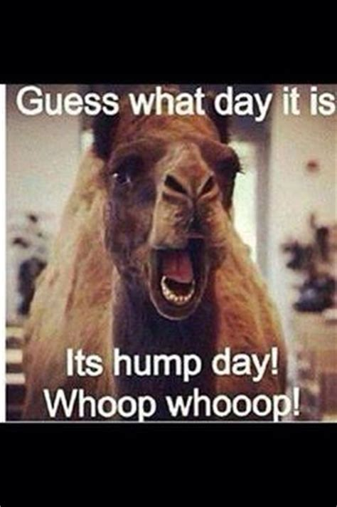 geico camel commercial hump day hump day camel this commercial gets me every time