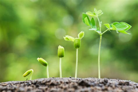 laporan praktikum pertumbuhan  perkembangan tanaman
