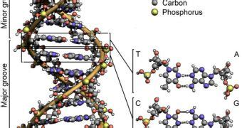 Dna Origami Software - automation of dna origami folding is within reach