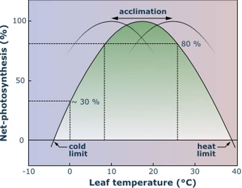 temperature response curve of rates of leaf respiratory co2 release r alpandino alpine plants carbon relation and growth photosynthesis of alpine plants
