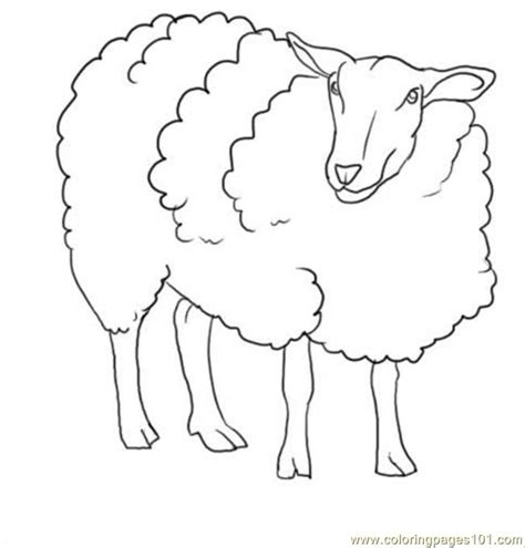 how to a sheep free coloring pages of to draw sheep