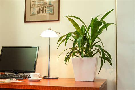 plants for desk desk plants osborne plant service