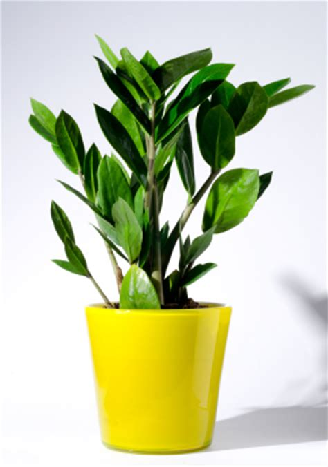 the best indoor plants best indoor plants