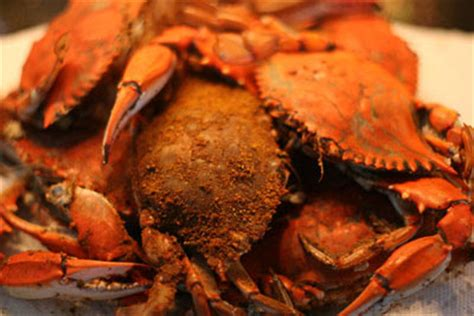 maryland steamed blue crab recipe recipe syndicate