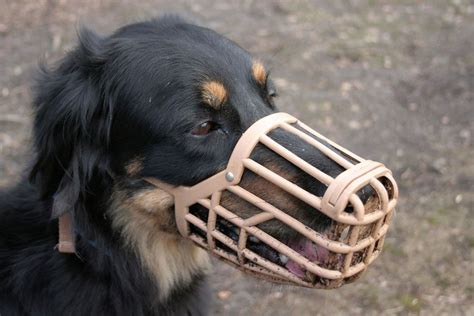 muzzle for dogs dogs and muzzles does your need one pets4homes