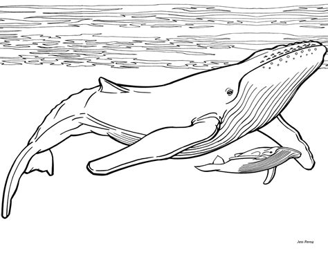 humpback whale coloring pages eating coloring book