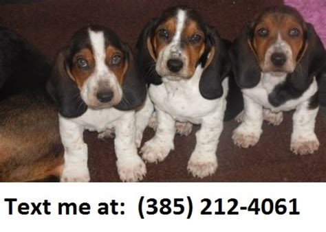 basset hound puppies for sale in michigan dfsa basset hound puppies for sale handmade michigan