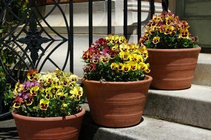 Pansy Garden Ideas Seasonal Container Garden Ideas Lovetoknow