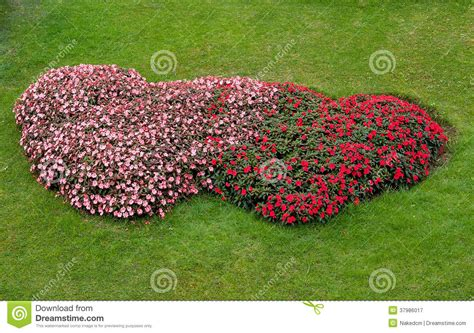 a shaped garden flower flower garden shape royalty free stock photography