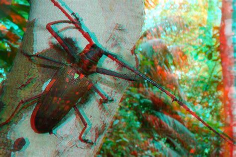 imagenes 3d jps ダビデスシロスジカミキリのアナグリフ3d写真 海野和男のデジタル昆虫記 緑のgoo