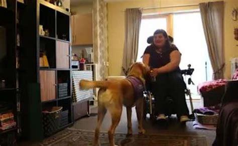 griffin sedia a rotelle griffin aiuta la sua amica disabile a fare la spesa my