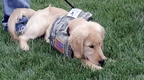 dogs for wounded warriors wounded warriors helping dogs help vets abc news