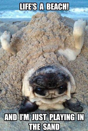 Funny Beach Memes - funny pug dog meme pun pugs french bulldogs