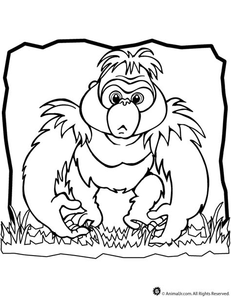 schnauzer coloring pages coloring home